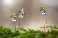 Glasperlen by Wolfgang Korazija on 500px