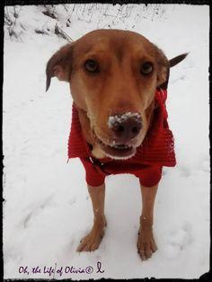 Pet Spotlight Interview - Olivia Canine Epilepsy & Ending BSL(breed specific legislation) Ambassador!