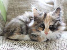 cute kittens photos1 - kittens #kittens #cutekittens #cats