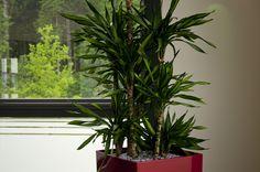 """Pflanzen sind in Räumen ein """"MUST-HAVE"""" http://apprico.de/pflanzen-sind-in-raeumen-ein-must-have/"""