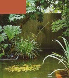 Deze verhoogde vijver wordt omringd door bladplanten met een tropische uitstraling, zoals de Gunnera aan de voet van een winterharde Kalopanax septemlobus. De waterval uit de muur versterkt de tropische sfeer. (Ontwerp en locatie: Dick Huigens)
