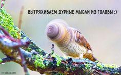 Весёлые картинки))) -ставь лайк,если они подняли тебе настроение!!!)))