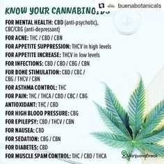 Read the chart. What's missing? CBDA works up to times better than plain CBD. You can find it in Pure Gold Super Only from CTFO. Click the pic or link to find out more. Weed Facts, Marijuana Facts, Marijuana Butter, Marijuana Recipes, Medical Benefits Of Cannabis, Medical Marijuana, Ganja, Endocannabinoid System, Cannabis Edibles