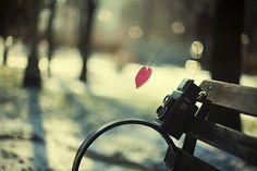 Love Photography.  >>>http://pulpypics.com/love-photography/