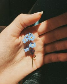 Find images and videos about blue, aesthetic and flowers on We Heart It - the app to get lost in what you love. Flower Aesthetic, Blue Aesthetic, Aesthetic Vintage, Mode Collage, Wall Collage, Photographie Portrait Inspiration, Aesthetic Pictures, Belle Photo, Aesthetic Wallpapers