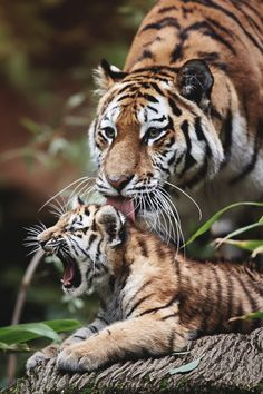 Mama, let it be! by Rene Unger