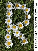 Free art print of Letters of daisies. Get up to 10 Gallery-Quality Art Prints for Free. Gift Card Printing, Flower Words, Daisy Art, Free Art Prints, Girl Photo Poses, Pretty Flowers, Daisies, Printable Art, Canvas Wall Art