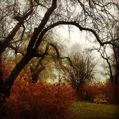 Taking email break for the #soul. Foggy #garden #beauty in #death  #trees #flowers dried #hydrangea #fog #om #phototag_it