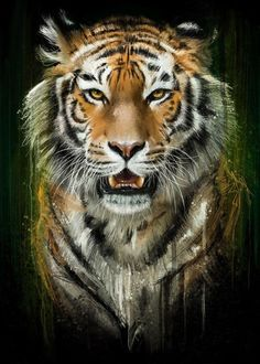 tiger art - 26318 by Emiliano Morciano metal posters Tiger Artwork, Tiger Painting, Big Cats Art, Cat Art, Animal Paintings, Animal Drawings, Funny Animals, Cute Animals, Wild Animals