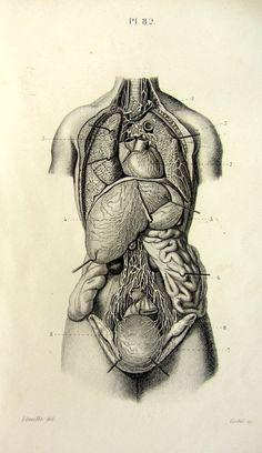 1846 Antique human lymphatic and circulatory by LyraNebulaPrints