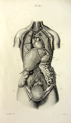 1846 Antique human lymphatic and circulatory by LyraNebulaPrints