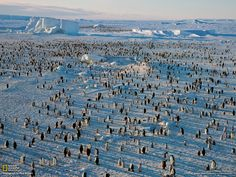 http://ngm.nationalgeographic.com/2012/11/emperor-penguins/img/05-ross-sea-penguin-colony_1600.jpg