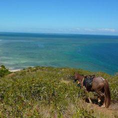 Découvrez la grande chevauchée en Nouvelle-Calédonie avec Cheval d'Aventure ! #voyage #cheval