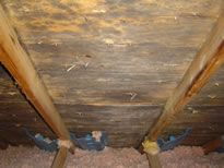 Attic Mold and Mildew - Why Is There Mold In My Attic?