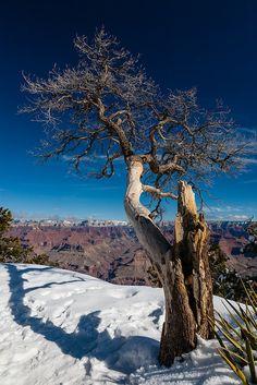Deep blue sky over barren tree