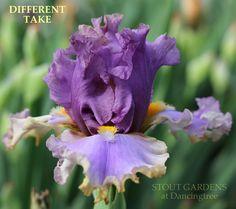 Iris DIFFERENT TAKE