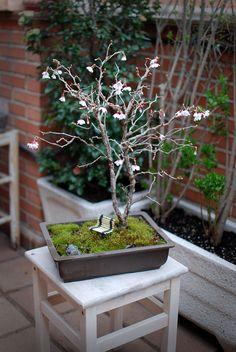 El bonsai de Cerezo