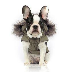 15 tenues d'hiver pour #chiens repérées sur #Pinterest #manteaux
