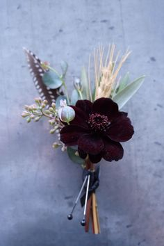 Cute boutonniere comprised of chocolate cosmos, greens, wheat, and pheasant feathers. | Whim Florals