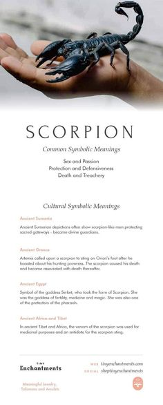 Scorpion Symbolism - Scorpion Dream Meaning, Scorpion Mythology and Scorpion Spirit Animal Meanings Full Infographic Animal Meanings, Animal Symbolism, Meaning Full Tattoos, Goddess Meaning, Zodiac Quotes, Scorpio Quotes, Zodiac Signs, Whats Your Spirit Animal, Spiritual Animal
