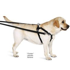 Freedom No Pull Harness and Leash - Dog Beds, Gates, Crates, Collars, Toys, Dog Clothing & Gifts