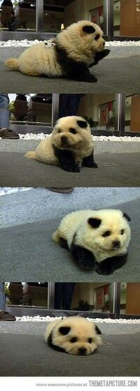 Pandogeal (Panda/Dog/Seal)?