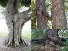 Very Funny Tree!