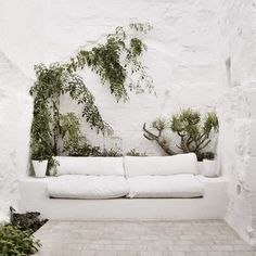 White couch and plants