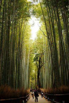 Bamboo oath, Kyoto,  Japan
