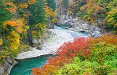 The Best of Japan This Autumn | Autmn Leave × Hot Springs - JAPANiCAN.com