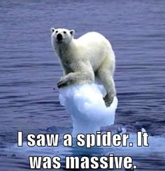#FunnyFriday    www.oceanwide-expeditions.com