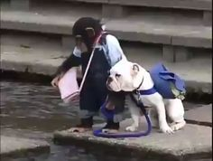 Pan the chimp walks her bulldog on a leash but has trouble getting him to jump over the water. Cute Little Animals, Cute Funny Animals, Funny Cute, Funny Dogs, Cute Animal Videos, Funny Animal Pictures, Cute Puppies, Cute Dogs, Animal Memes
