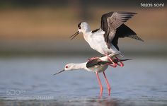 stilt by TejasSoni #animals #pets #fadighanemmd