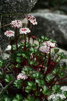 flowers online kota kinabalu