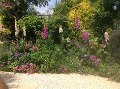 Foxgloves, geraniums and roses in gravel garden