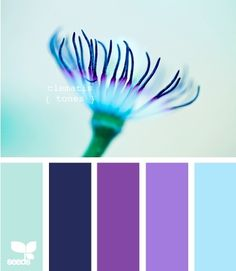 Design Seeds' Palette Search- pick a color and search. Finds matches from photo palettes. Here, clematis tones.-- the navy and lighter blue Purple Color Palettes, Colour Pallette, Colour Schemes, Color Combos, Purple Palette, Design Seeds, Paleta Pantone, Turquoise And Purple, Purple Lilac
