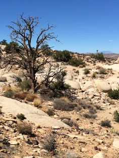 Best day hikes Joshua Tree National Park Ryan Mountain