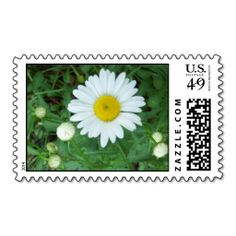 >>>Coupon Code          A Shasta Daisy & Buds Stamps           A Shasta Daisy & Buds Stamps Yes I can say you are on right site we just collected best shopping store that haveThis Deals          A Shasta Daisy & Buds Stamps today easy to Shops & Purchase Online - transferred dir...Cleck Hot Deals >>> http://www.zazzle.com/a_shasta_daisy_buds_stamps-172361679380373134?rf=238627982471231924&zbar=1&tc=terrest