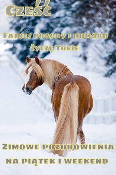 Horses, Blog, Pictures, Animals, Photos, Animales, Animaux, Horse, Blogging