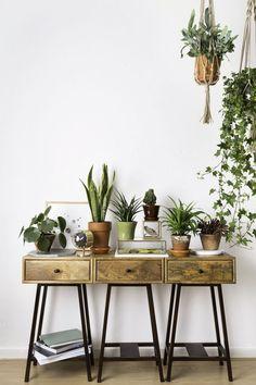 Finden Sie die richtige Pflanze für ein frisches zu Hause