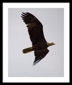 Dougherty Iowa Eagles 2 Framed Print By Bonfire #Photography
