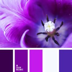 Bright and juicy palette of shades of violet colour with elements of dark blue and white. It doesn't have strong contrast and it is made in about one colou. Colour Pallette, Colour Schemes, Color Combos, Color Balance, Color Harmony, Balance Design, Shades Of Violet, Design Seeds, Color Swatches