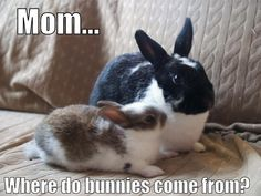Bunny asks Momma Rabbit a tough question...  Timothy Hay for Rabbits at http://smallpetselect.com/timothy-hay-for-rabbits