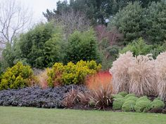 Photo of Design Combinations Shrubs Conifers Grasses Bamboo Planting in Border at Hilliers Hampshire in Winter
