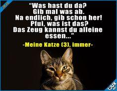 Sehr wählerisch ^^'  Lustige Sprüche und Bilder #Katze #Katzen #Katzenliebe #Essen #lustig #niedlich #Humor #Sprüche #lustigeMemes #lustigeBilder