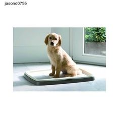 Puppy Toilet Training Tray 7 Pads Dog Pet Trainer Starter Kit Protect Floor Dogs Puppy Toilet Training, Pet Trainer, Pet Dogs, Pets, Dog Supplies, Starter Kit, Labrador Retriever, Trainers, Tray