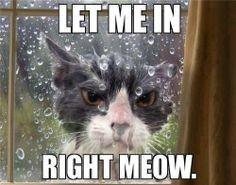 Kitty not a fan of the rain. www.kittyprettygifts.com #cats #cute #lolcats…