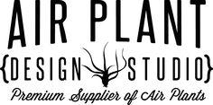 Air Plant Design Studio