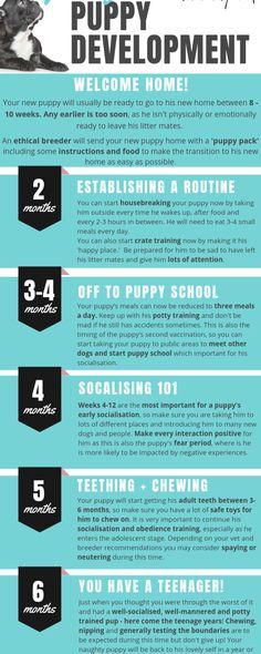 New Puppy Checklist, Puppy Schedule, Puppy Training Schedule, Basic Dog Training, Training Your Puppy, Dog Crate Training, Puppy Care, Dog Care, Best Puppy Food