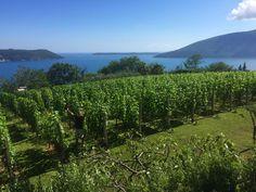 Savina | Wines & Olives from Boka Kotorska